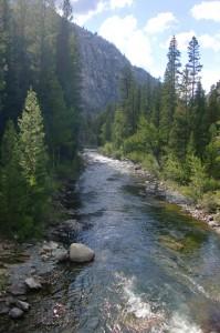 Sequoia-- small