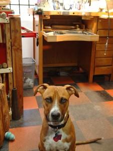 Kilo, Studio Dog