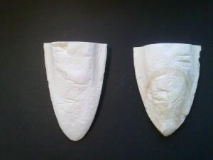 Two cuttlebone halves